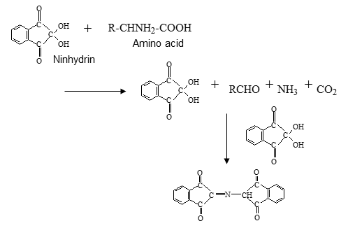 Fig.8 Chemical reaction of amino acid and ninhydrin