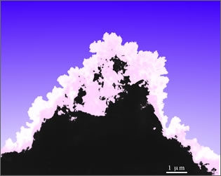 The Coral of Micro Island (W-Si-O particles on a Si single crystal)