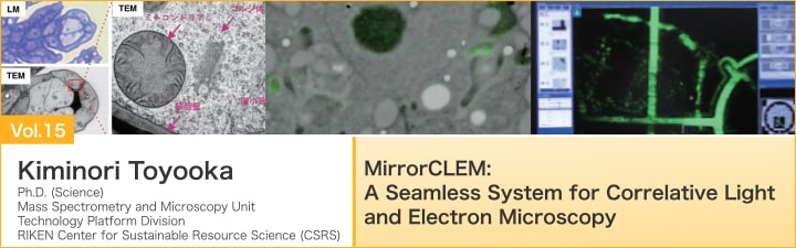 MirrorCLEM: A Seamless System for Correlative Light and Electron Microscopy