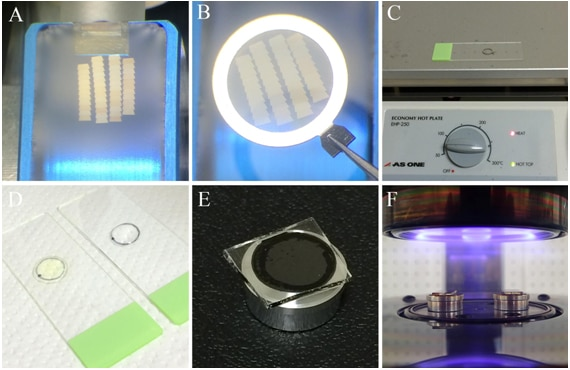 serial section scanning electron microscopy   hitachi high