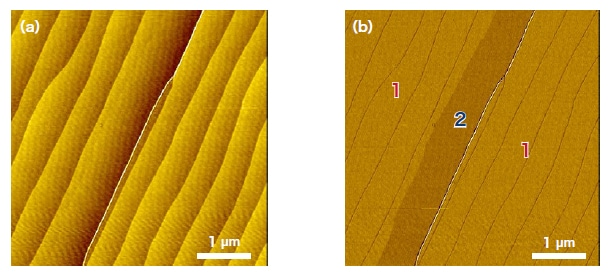 Friction-force microscopy images. (a) Morphology image. (b) Friction image