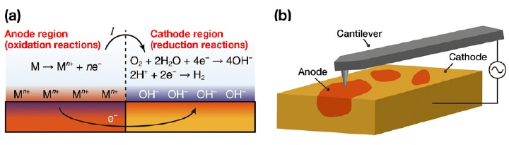 (a) A typical corrosion reaction. (b) Using OL-EPM to visualize a local corrosion cell