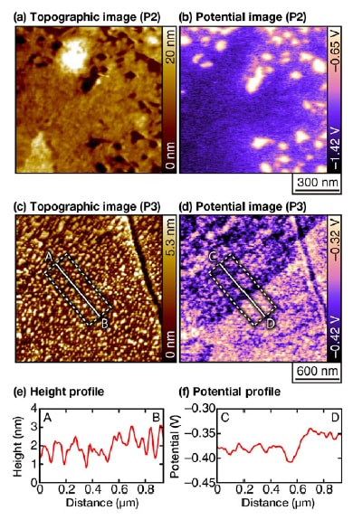 Topographic and potential images for a duplex stainless steel sample in an acidic solution of pH 3, acquired after the sensitization processing