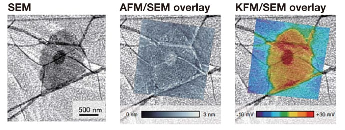 Fig 13. An example of measurement affinity between AFM and SEM