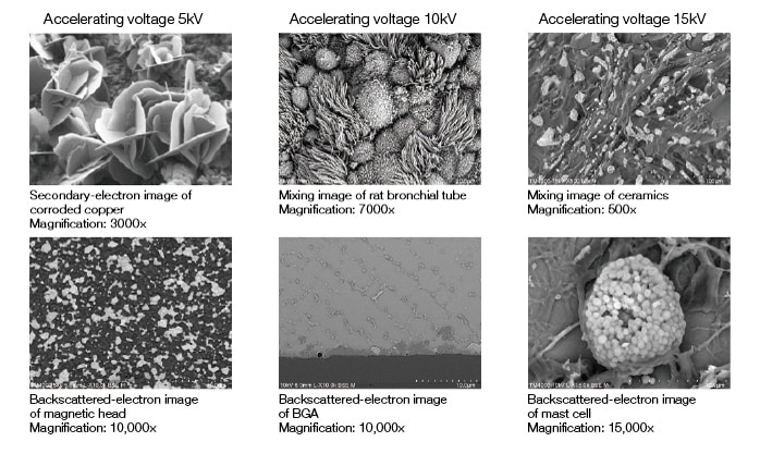 Fig. 6 Images acquired by the TM4000